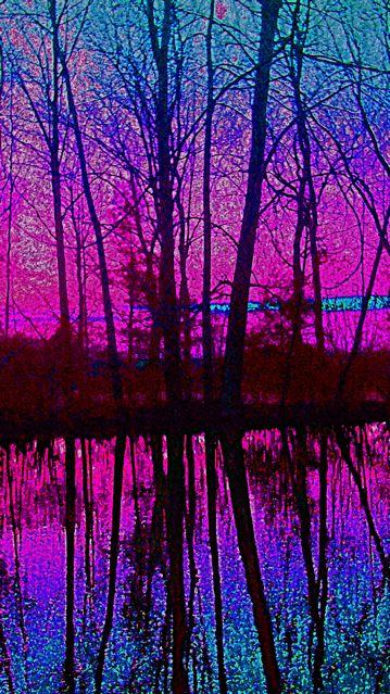 The Pond Last Night